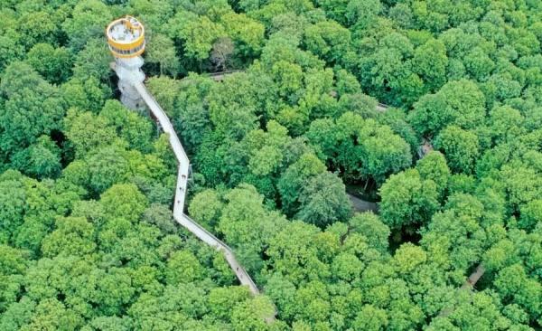 Буковые леса ФРГ